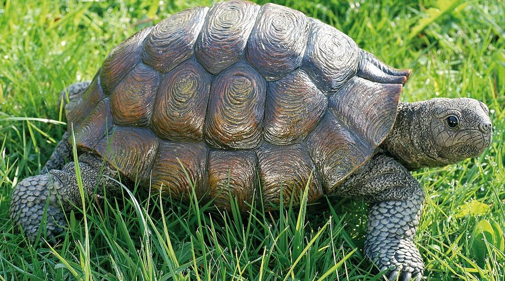 7 objets de d co pour le fengshui meubles - Images tortue ...